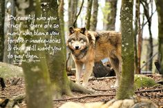 Love this :) especially the beautiful wolf