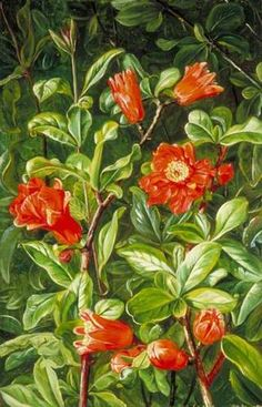 Flowers+of+the+Pomegranate,+Painted+in+Teneriffe+-+Marianne+North