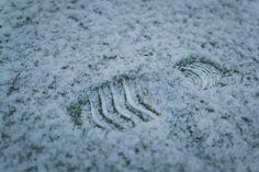 [#HD Wallpaper] A footprint on a light layer of snow in the grass - Leave No Trace, #Camping #Fire #Winter #Campsite Brown's Shoe Fit Co, Leadership, Campfire  - Photo by Paul Green @pgreen1983 (unsplash)  - Follow #extremegentleman for more pics like this!