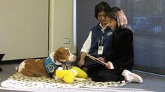 Reading to a PAWS dog at the Fairfield Civic Center Library