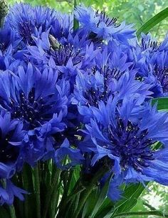 Ideas and Decor Fresh Flowers, Blue Flowers, Simply Beautiful, Beautiful Flowers, Plant Fungus, Shades Of Blue, Color Inspiration, Lush, Orchids