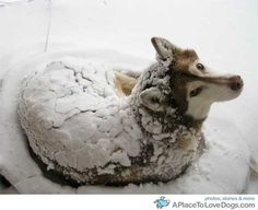 some dogs really are bred for snow