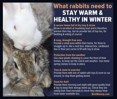 More tips can be found here... http://best4bunny.com/keep-rabbit-warm-healthy-winter/
