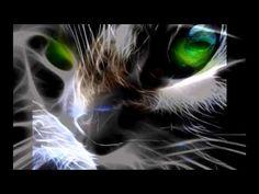 Koty kotki-ewa camaroma