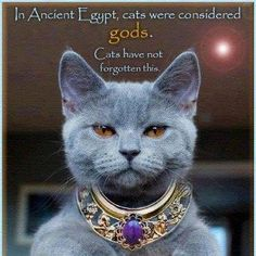 Im obsessed with Ancient Egypt and Im obsessed with my fur babies