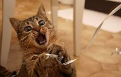 OMG YOU GOT ME RIBBON!!!! hahaha this picture always cheers me up.