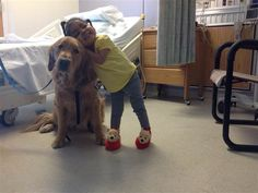 A distraction from reality: Comfort dogs bring peace to Boston victims(Photo: NBC) #BostonMarathon