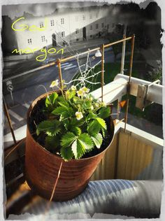 My rusty balcony <3