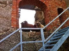Sheeps conquered the castle Castle Ruins, Places, Lugares