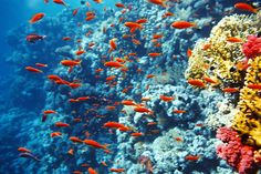 Snorkeling the coral reefs