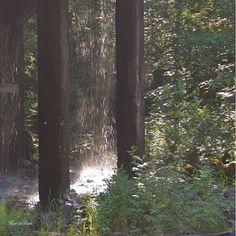 KATSE VASEMPAAN PÄIN: UNELMIEN VOIMA Nature Images, Nature Pictures, Finland, Wilderness, Hiking, Landscape, Plants, Life, Walks
