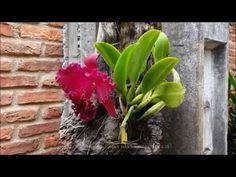 ORQUIDEAS FORTES E HIDRATADAS-SERIE1 - YouTube