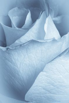 Soft Blue Photograph by Heidi Smith
