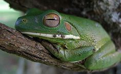 Mount Hagen wildlife location in Papua New Guinea, | Wildlife Worldwide