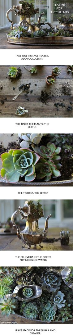 Tea Party. Succulents for Two—Gardenista