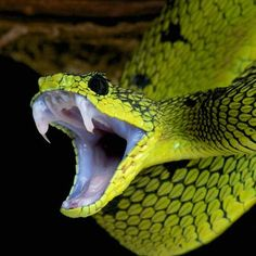"""I dream about snakes"" – what does it mean"
