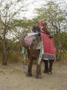 Elefantastic  90, Chandra Mahal Colony, Delhi Rd, Amber, Jaipur 302028, India