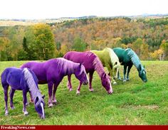 "The Horse of A Different Color in ""The Wizard of Oz"" was colored with Jell-O! - Celebs - Mar 6, 2012 - Interesting Facts and Fun Facts - OMG Facts"