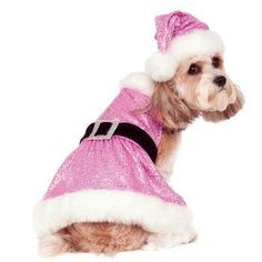 e1e179c96eec 1616 Best Summer Dog Clothes images in 2019