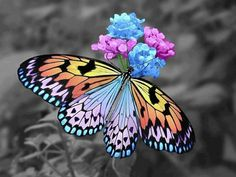 Butterfly. if i would ever get a butterfly tattoo, it would be for my Aunt Dot and I would want it bright and colorful like this