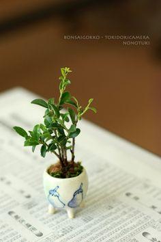 『超ミニ盆栽教室5年目、1/20。』