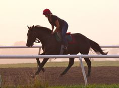 Pretty Fair Hill morning, pretty horse: 2yo colt HAY OATS AND WATER. Megan Jones/Team Valor photo
