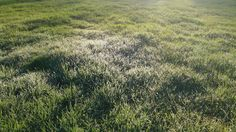 Morning dew on the grass.