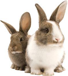 awesome rabbits http://ift.tt/2nYJxRu