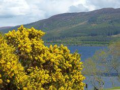 Urquart Castle, Loch Ness Photo taken by Yasemin Onal #scotland #castle #lake #lochness #nature #bestoftheday #flowers #highlands
