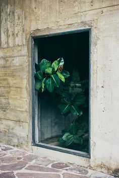 - concrete and green -