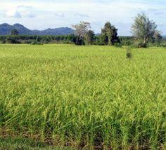 Des producteurs formés au financement des activités agricoles