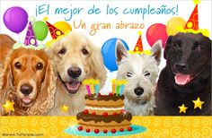 imagenes de cumpleaños gratis Funny Animal Pictures, Funny Animals, Happy Birthday Greetings, Birthday Decorations, Birthdays, Dogs, Holiday, Cute, Cards