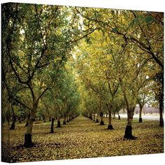 16'' x 24'' ''Fall Orchard'' Canvas Wall Art by Kathy Yates ($104) ❤ liked on Polyvore featuring home, home decor, wall art, multicolor, canvas home decor, canvas wall art, horizontal wall art, fall home decor and autumn home decor