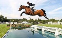 Horses jumping - Google Search