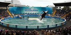 Lolita's tank violates the APHIS regulations on acceptable tank size. She has been living in this tiny... (454 signatures on petition)