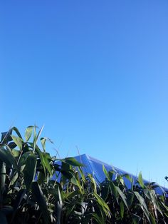 @al_ryan78 Alison Ryan 9h  Catching the #612bluesky before the clouds return #brisbane