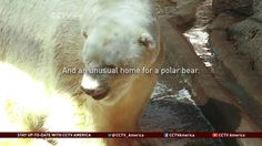 Is There Hope for Arturo the Polar Bear?