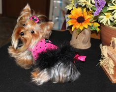 Yorkie Easter Dress Harness Pampered Puppy Yorkie