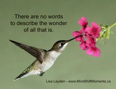 """There are no words to describe the wonder of all that is."" - Lisa Layden"