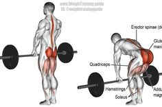 Target your glutes with the barbell straight back stiff leg deadlift, an isolation exercise that synergistically works your hamstrings and adductor magnus. Rumpf Training, Weight Training Workouts, Gym Workouts, Workout Routines, Training Exercises, Strength Training, Good Back Workouts, Back Exercises, Stomach Exercises