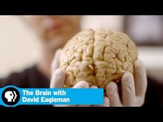 """THE BRAIN WITH DAVID EAGLEMAN 
