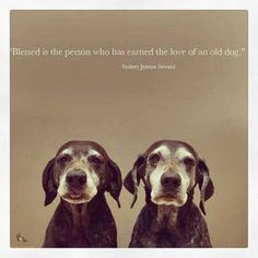 I want to adopt old dogs from shelters and give them happy last few years