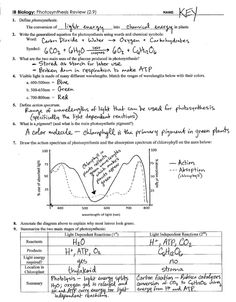 Six Levels of Ecology   Ecology Review Worksheet 1 answers ...