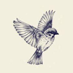 Bird ▼