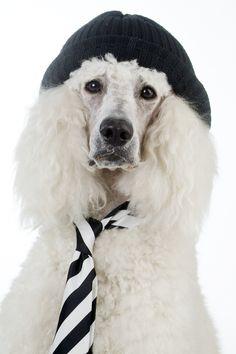 Heute suchen wir den stylischsten Hund Berlins - Dieser ist uns heute vor die Linse gesprungen :-)  Hast du auch einen Fashion-Dog? Wir freuen uns auf Bilder deines tierischen Models!  Foto: Manja Elsässer