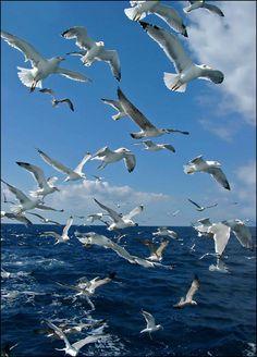 Coisas de Terê→ Aves Marinhas By Alex Lebedev
