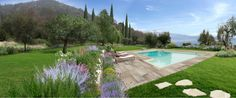 Garden overlooking Garda lake. A private park in Salò. Warm atmosphere immersed in olive tree grove.