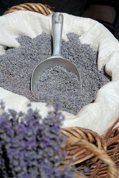 dried lavender for the flower girls