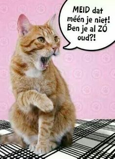 Afbeeldingsresultaat voor verjaardag dame met katten