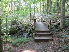 Indian Run Trail in Springton Manor Farm Sate Park, Glenmoore, Pa.